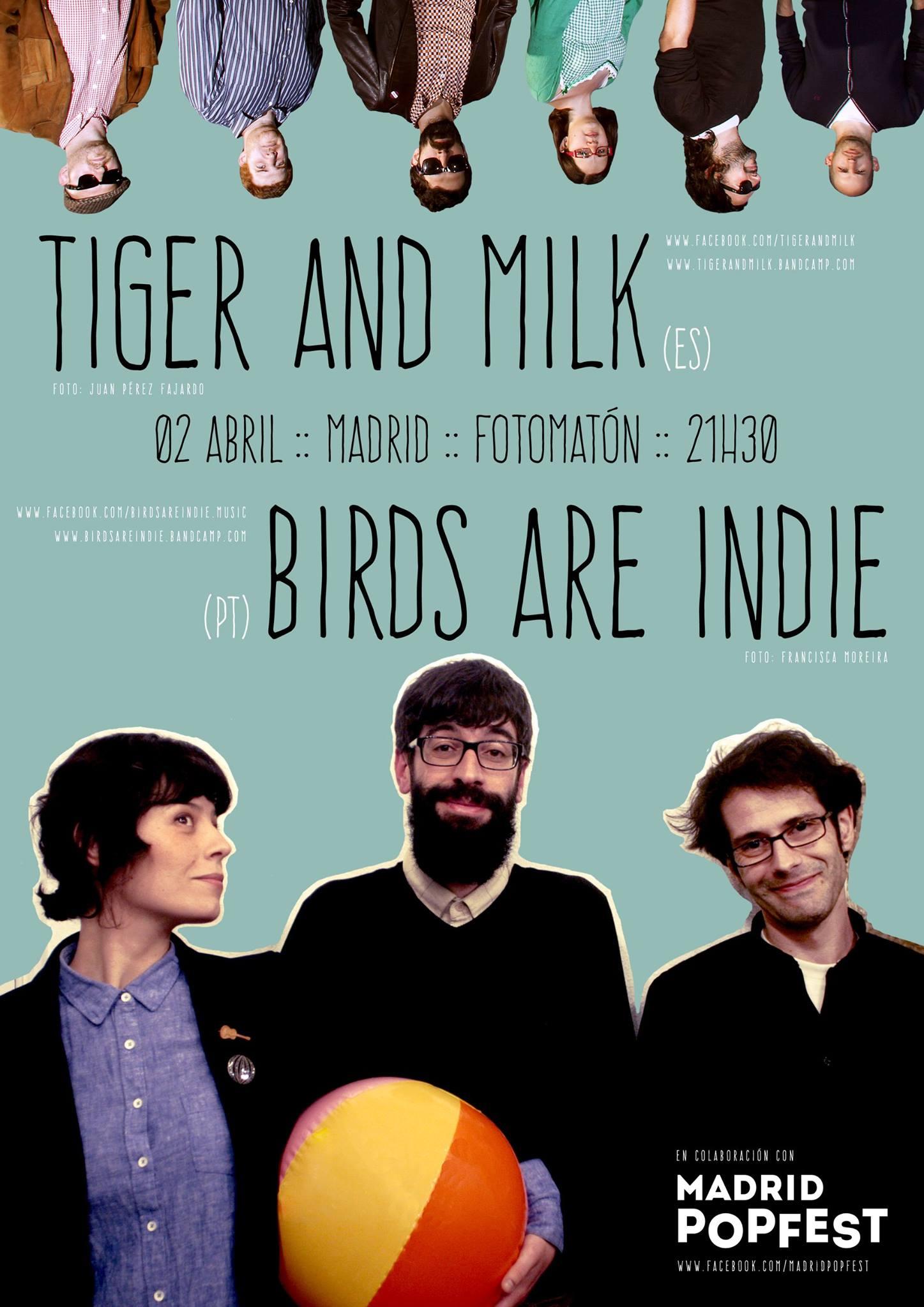 Birds are indie en concierto en Madrid
