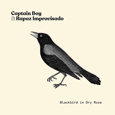 Blackbird in Dry Rose