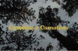 Camélias e Camafeus